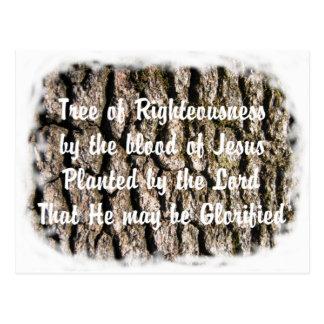 Carte Postale La bible de nature d'écorce d'arbre a basé le