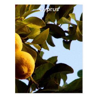 Carte Postale La Chypre Lemon Grove