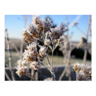 Carte Postale La de dans de fleurs de DES glace