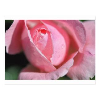 Carte Postale La floraison s'est levée