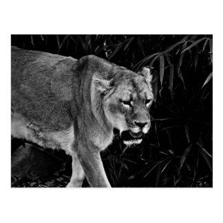 Carte Postale La lionne