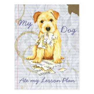 Carte Postale La ma Norfolk Terrier a mangé mon plan de cours
