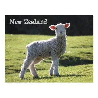 Carte Postale La Nouvelle Zélande - agneau adorable vous