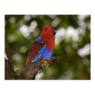 Carte Postale La Papouasie-Nouvelle-Guinée, Lae. Perroquet