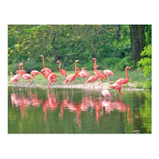 Carte Postale La rangée de flamant au lac au printemps, des