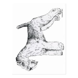 Carte Postale La région des lacs Terrier