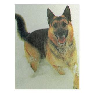Carte Postale La Suisse vintage, chien de délivrance de montagne