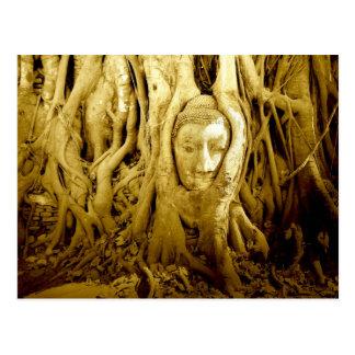 Carte Postale La tête de Bouddha empêtrée dans la figue