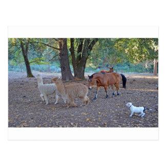 Carte Postale La vie au ranch