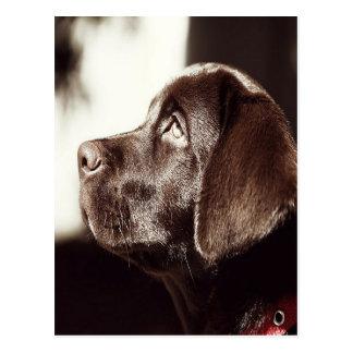 Carte Postale Labrador retriever noir