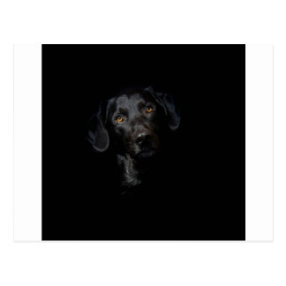 Carte Postale Labrador retriever noir personnalisable