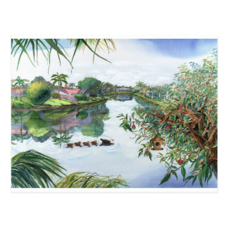Carte Postale Lac Jacaranda