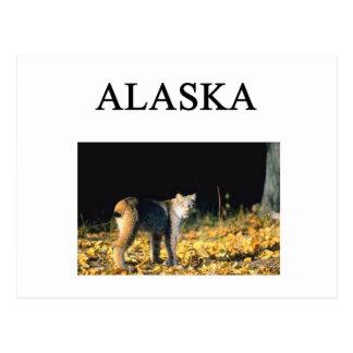 CARTE POSTALE L'ALASKA
