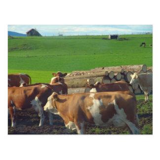 Carte Postale L'Allemagne, Bavière, vaches laitières dans le