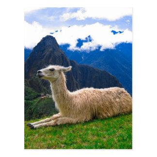 Carte Postale Lama dans Machu Picchu