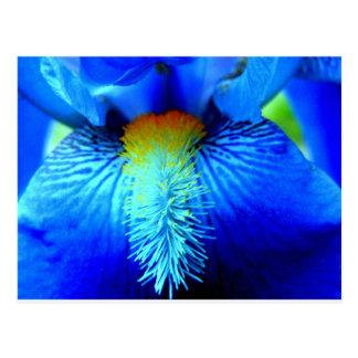 Carte Postale Langue d'un iris