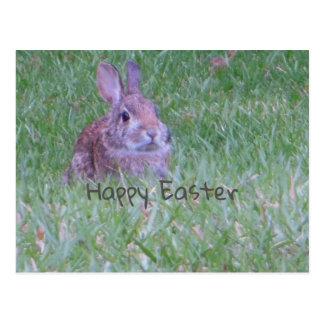 Carte Postale Lapin sauvage Joyeuses Pâques