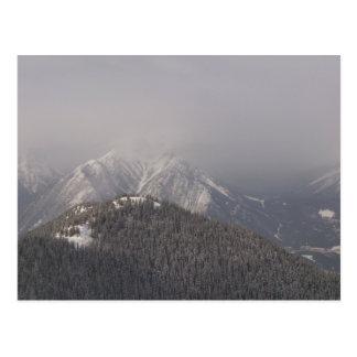 Carte Postale L'arbre a couvert le dessus de montagne