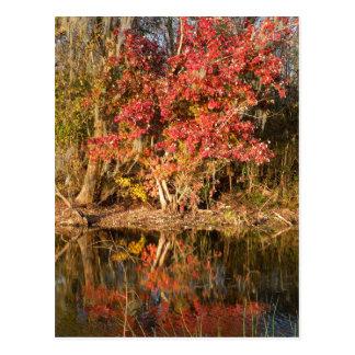 Carte Postale L'arbre rouge au coucher du soleil