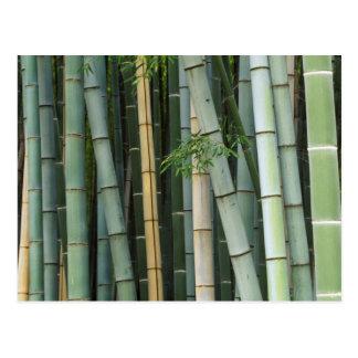 Carte Postale L'Asie, Japon, Kyoto, Arashiyama, Sagano, bambou