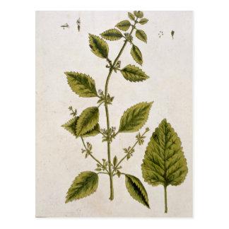 """Carte Postale Le baume, plaquent 27 """"d'un de fines herbes"""