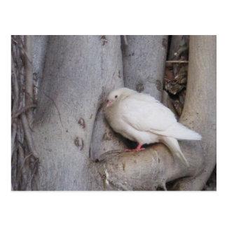 Carte Postale Le blanc potelé a plongé dans l'arbre