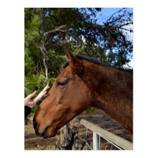 Carte Postale Le cheval de Brown a appelé Bennie aimant Pat,