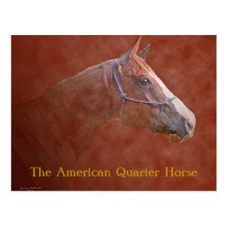 Carte Postale Le cheval quart américain