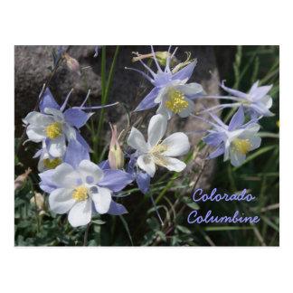 Carte Postale Le Colorado Columbine