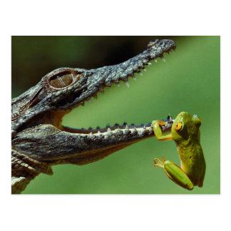 Carte Postale Le crocodile et la grenouille