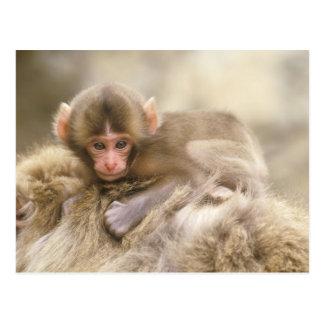 Carte Postale Le Japon, Nagano, Jigokudani, bébé de singe de