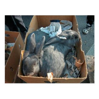 Carte Postale Le marché de l'agriculteur, Louans, Bresse, lapins