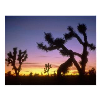Carte Postale LE NEVADA. LES Etats-Unis. Brevifolia de yucca