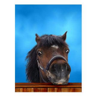 Carte Postale Le poney effronté, me customisent