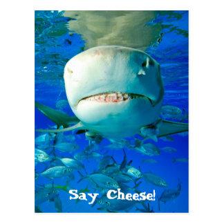 """Carte Postale Le requin de citron """"indiquent le fromage """""""