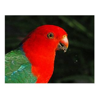 Carte Postale Le Roi Parrot
