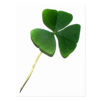 Carte Postale Le shamrock de St Patrick