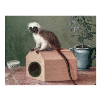 Carte Postale Le singe préféré de Karl Linnaeus