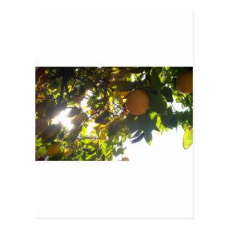 Carte Postale le soleil de citrons