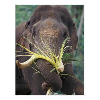 Carte Postale Le Sri Lanka, alimentations d'éléphant à