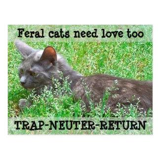 Carte Postale Les chats sauvages ont besoin d'amour - TNR