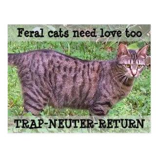 Carte Postale Les chats sauvages ont besoin du chat tigré