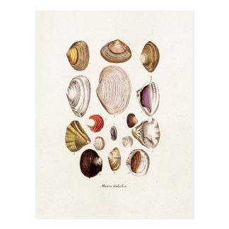 Carte Postale Les coquilles vintages de mer ont personnalisé la
