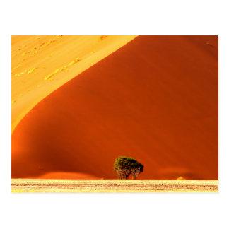 Carte Postale Les dunes rouges de Sossusvlei