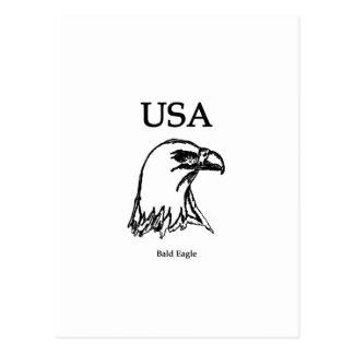 Carte Postale Les Etats-Unis (aigle chauve)