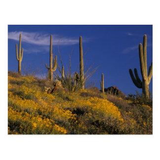 Carte Postale Les Etats-Unis, Arizona, ressortissant 2 de cactus