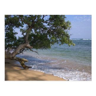 Carte Postale Les Etats-Unis, Hawaï, Kauai, échouent