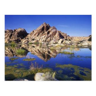 Carte Postale Les Etats-Unis, la Californie, parc national