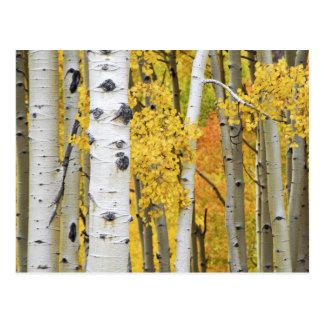 Carte Postale Les Etats-Unis, le Colorado, montagnes rocheuses.