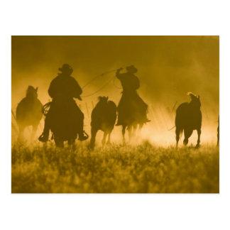 Carte Postale Les Etats-Unis, Orégon, Sénèque, ranch de